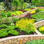Landscaping Ideas- Feature.